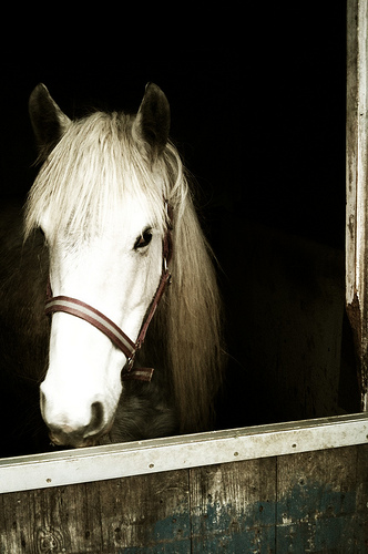 20120110-horse7
