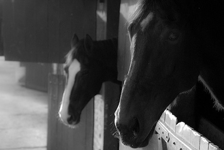 20120110-horse8