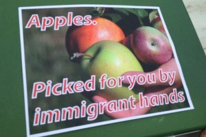 apples-picked-by-immigrant-hands